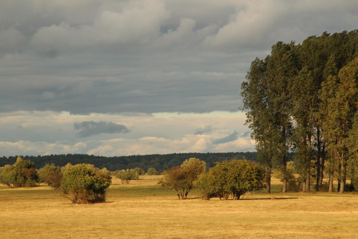 Eine Foto der weiten Elbwiesen-Landschaft, mit Sträuchern und Bäumen, in der Umgebung des Flusshofs.